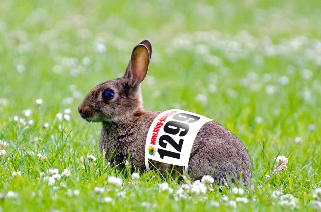 zajaczek_biegacz